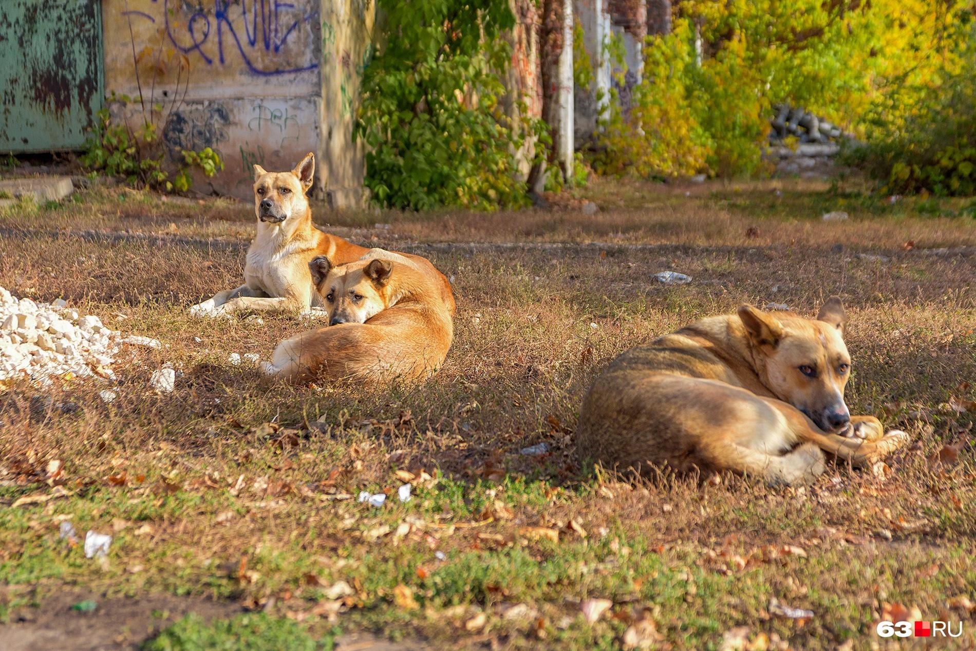 Одни зоозащитники говорят, что собаки в городе необходимы, чтобы сокращать популяцию крыс, другие обвиняют их в убийстве кошек и диких животных в пригороде