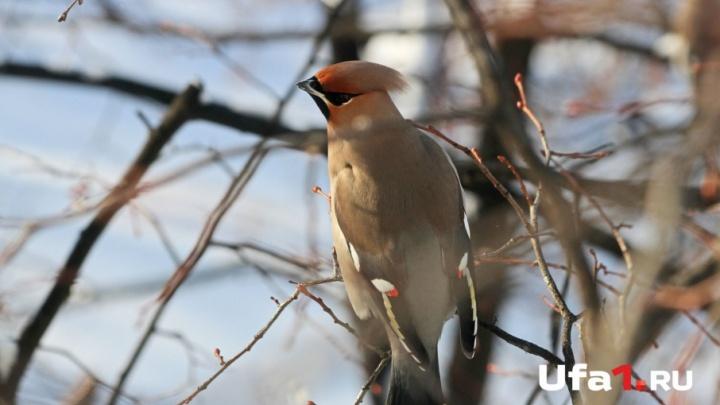 Фотосессия с совой и выставка птичьих гнезд: в Уфе с размахом отпразднуют Международный день птиц