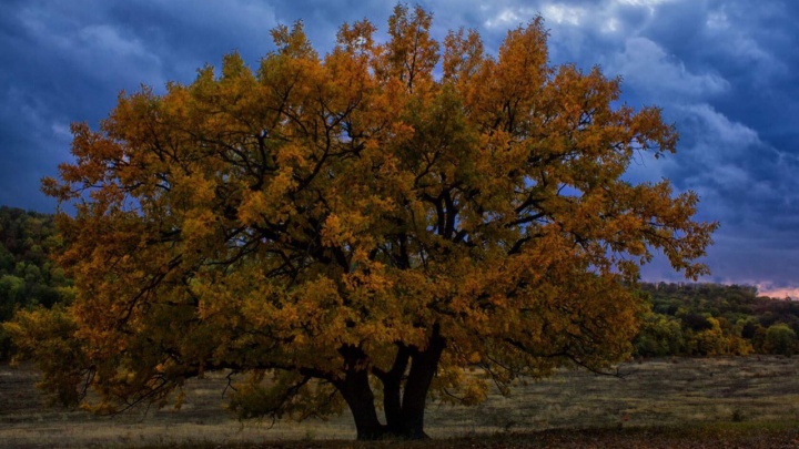 «Рада поделиться осенней красотой Прихоперья»: волгоградка сняла чарующие видыприроды