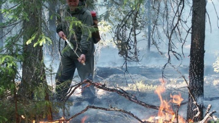 На Первомай на Урале выгорело 30 гектаров леса