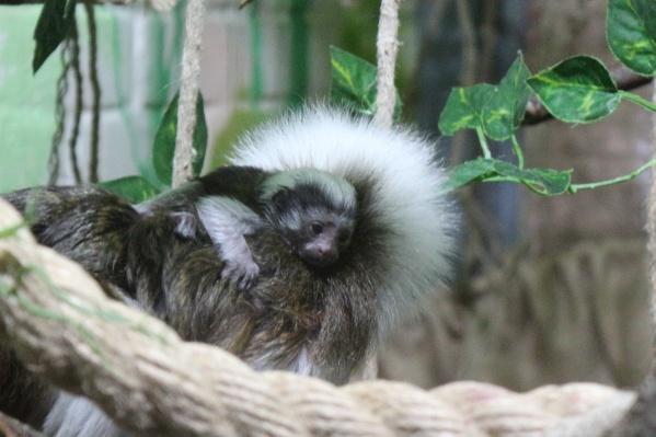Малыш родился в зоопарке 7 апреля
