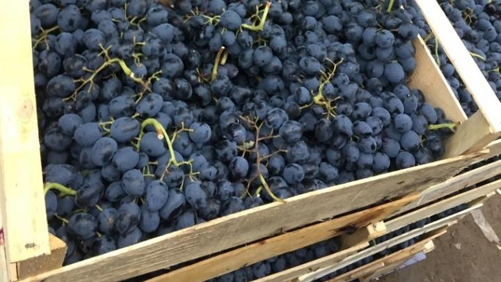 На границе Курганской области остановили более 20 тонн фруктов