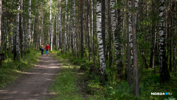 В Зеленогорске полицейские помогли заблудившемуся грибнику выйти из леса