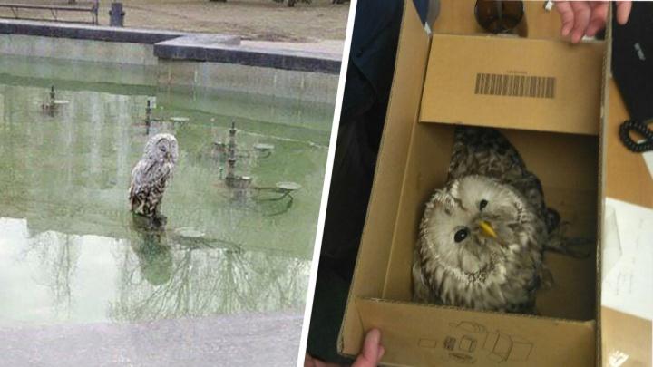 «Спрятали от неё все мышки»: челябинцы поймали сову в центре города
