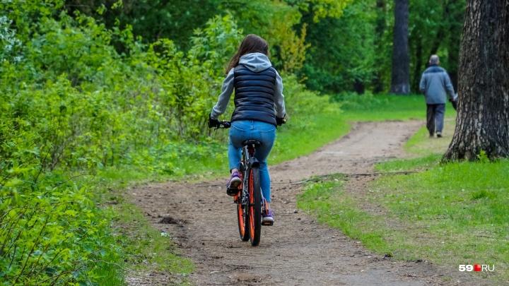Вокруг Черняевского леса появится кольцевой маршрут для велосипедистов