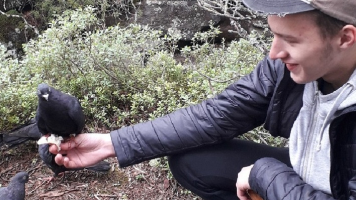 «Птицы ручные и голодные»: в Каменном городе туристы нашли 70 брошенных голубей