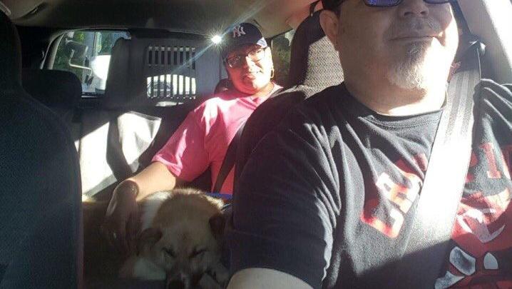 Спасённый омский пёс Лешик прилетел в США