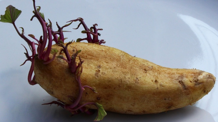 «Кажется, что они тянутся ко мне»: история екатеринбурженки, которая боится пророщенной картошки