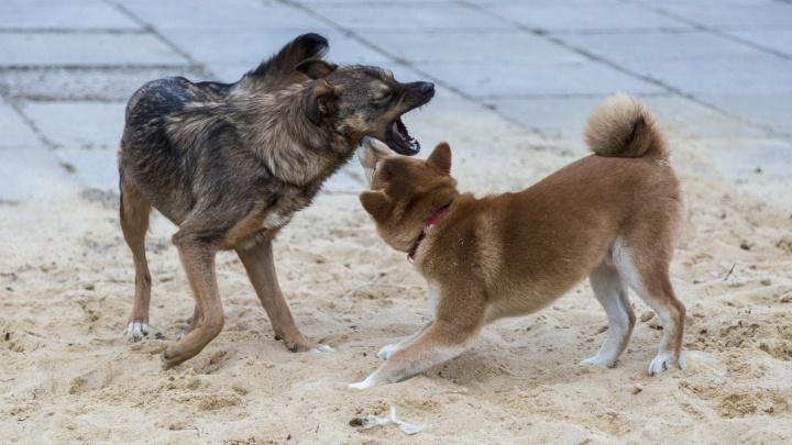 «Могут кинуться на малышей»: в Волгограде в метре от детского сада поселилась стая агрессивных собак