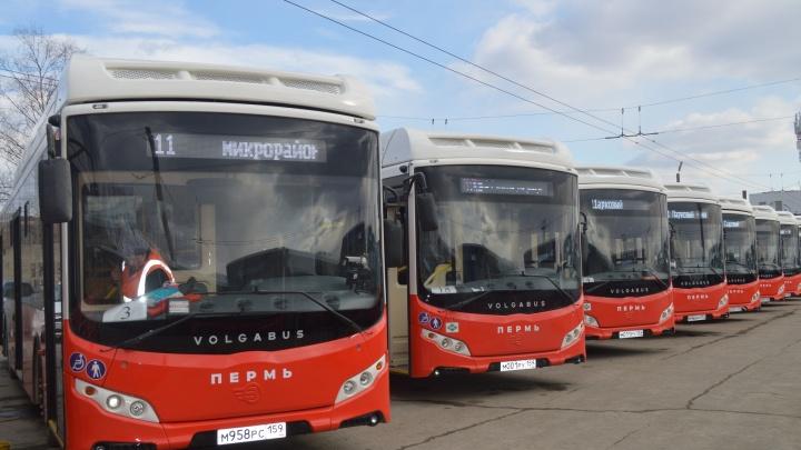В три микрорайона и на вокзал Перми вместо троллейбусов пустят автобусы