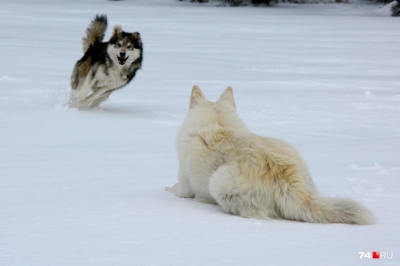 Местные собаки, одна из которых присоединилась к нашей команде, сопровождая повсюду