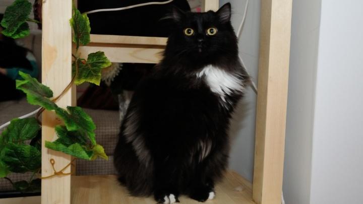 Сдай котика: где в Екатеринбурге оставить домашних животных на новогодние каникулы