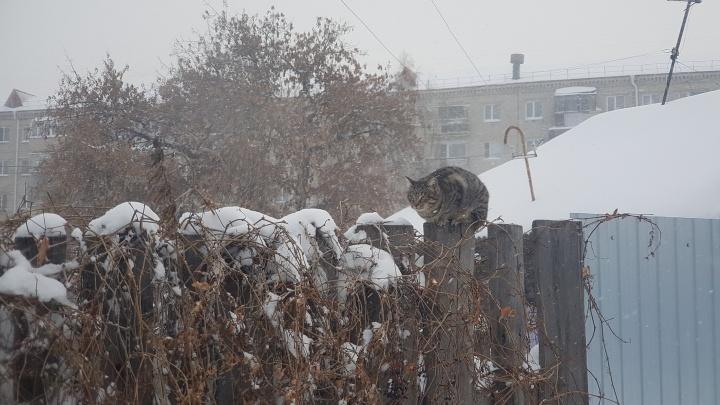 Против стихии не попрёшь: смотрим, как Курган накрыло снегом