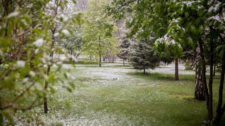 Заморозки идут: в Новосибирск возвращаются холодные ночи