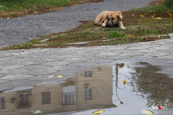 К середине недели волгоградская погода преподнесет горожанам неприятный сюрприз