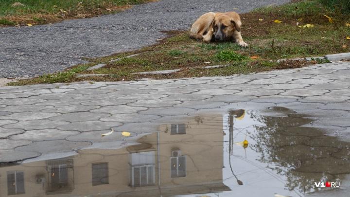 На пороге заморозки и дожди: в Волгоградской области похолодает до -2 градусов