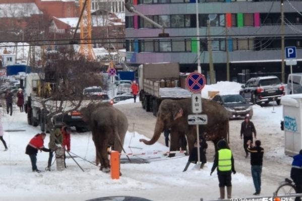Слоны устроили переполох в центре Екатеринбурга
