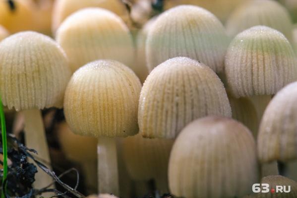 Врачи просят собирать грибы с осторожностью