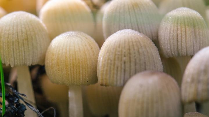 В Самарской области 18 человек отравились грибами