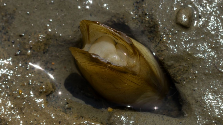 «Ранее неизвестные науке»: архангельские ученые обнаружили в Азии новые виды моллюсков