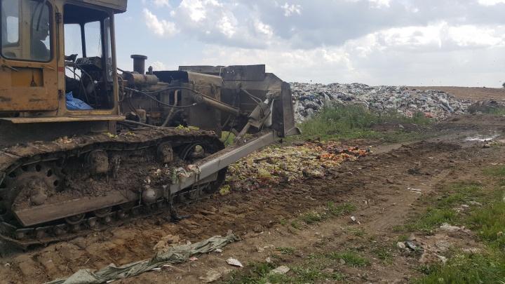 Сотни килограмм польских яблок и эстонского редиса раздавили бульдозером