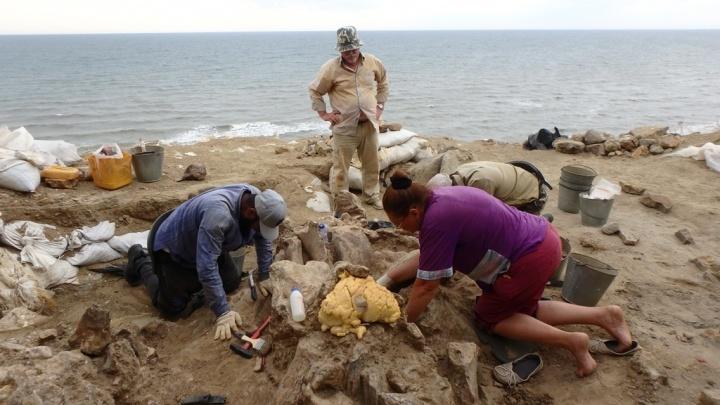 Азовские палеонтологи откопали череп древнего носорога на Таманском полуострове