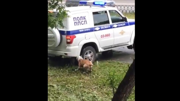 «Существовала угроза жизни людей»: кинологи — о действиях полицейских, застреливших пса на Уралмаше