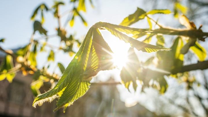 «Если сегодня тепло»: определяем по приметам, каким будет сентябрь