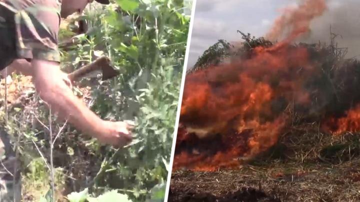 Полицейские и казаки сожгли 40 тонн конопли в Ростовской области