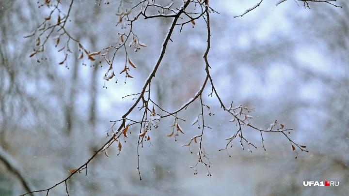 Бесснежно и морозно: синоптики рассказали о погоде на 2 декабря в Башкирии