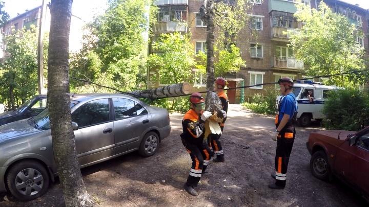 В Ярославле из-за ветра берёза рухнула на два автомобиля