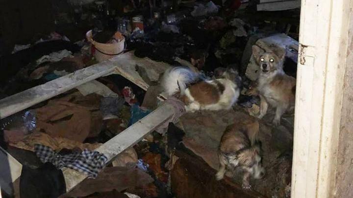 В Таганроге жильцы многоэтажки просят выселить соседку, превратившую квартиру в помойку