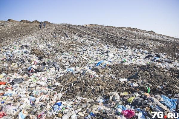 Большую часть денег потратят на то, чтобы привести в порядок ярославский мусорный полигон