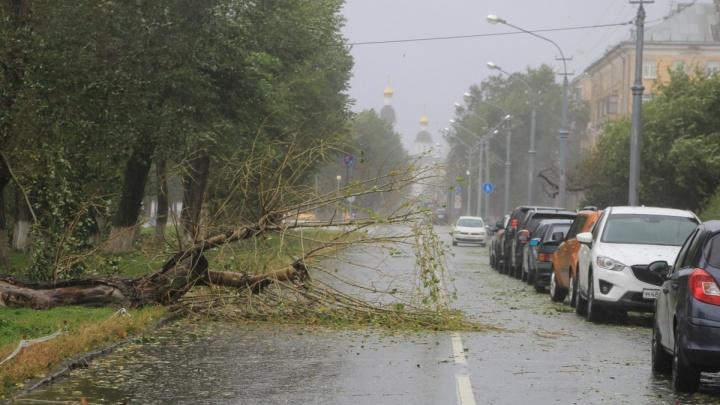«Берёзы все растащили»: в Архангельске и Северодвинске горожанам предлагают забрать древесину с улиц