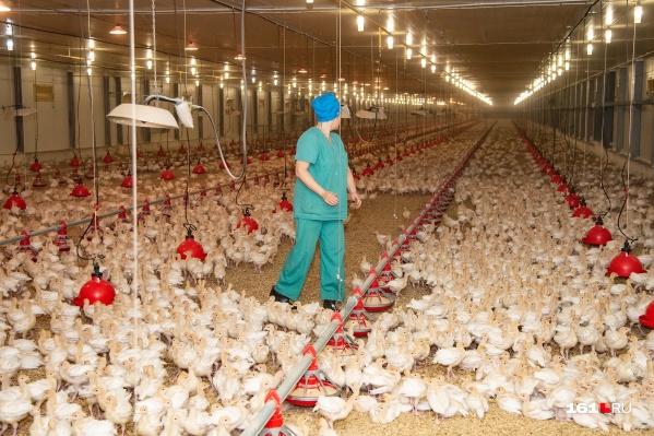 Производитель в прошлом был третьим по масштабам поставщиком мяса индейки в России