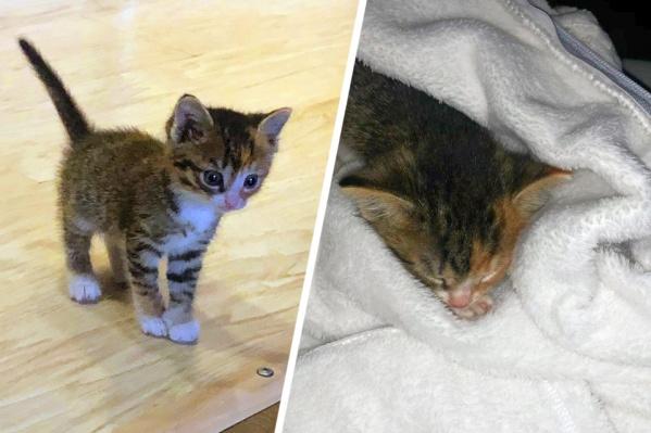 Новая хозяйка решила взять котёнка, после того как умер её предыдущий питомец