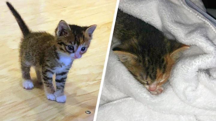 Назвали Лампочкой: таксист нашёл хозяйку для кошечки, с которой ездил на заказы