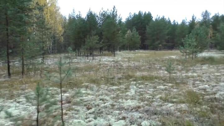 Житель Прикамья обнаружил ранее неизвестный лагерь ГУЛАГа