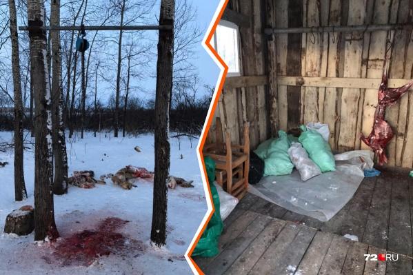 В охотугодье нашли останки косуль и одну тушу