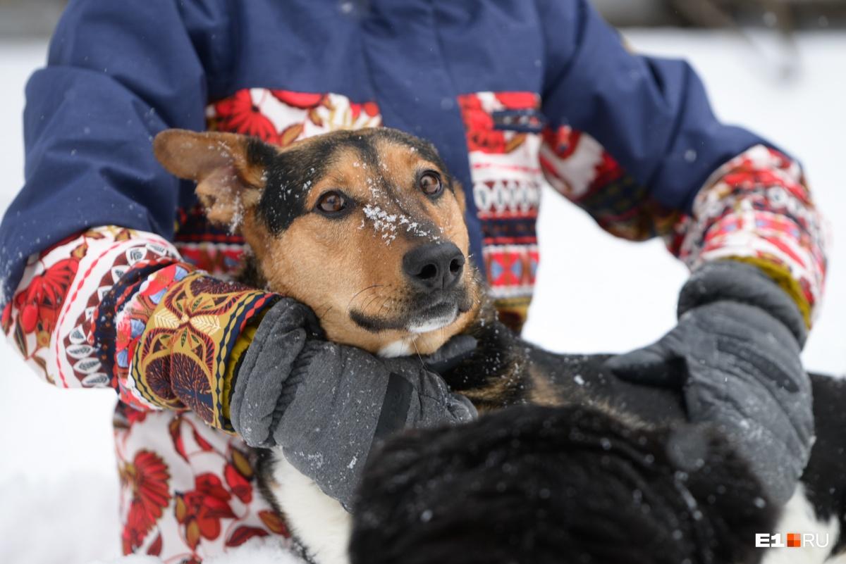 Левая передняя лапа у собаки не работает, но жить ей это совсем не мешает