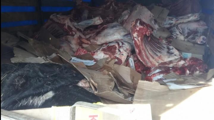 В Самарской области уничтожили 5,2 тонны говядины