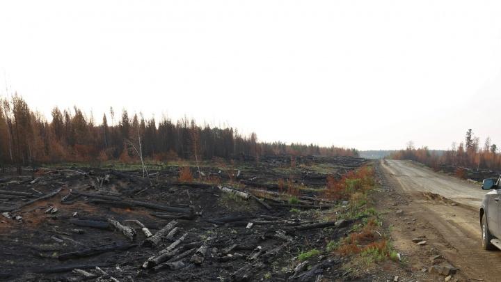 Возбуждено первое дело по лесным пожарам в крае. Халатность нашли у чиновников минлесхоза