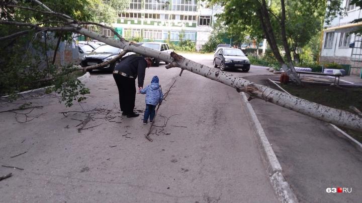 Во дворе на Силина дерево рухнуло на проезжую часть