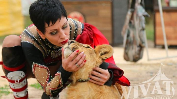 В Челябинск едет цирк-шапито Vivat: как попасть на представление бесплатно