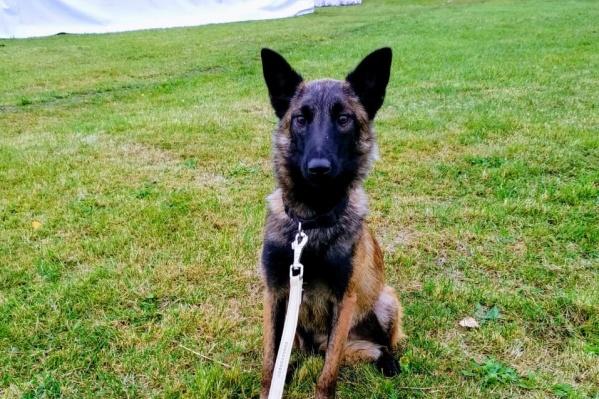 Собаки будут охранять склады с оружием и парки техники