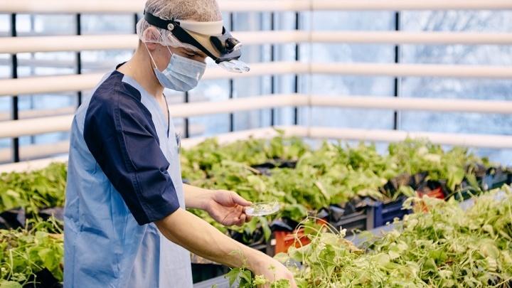 День из жизни агронома: работники сельского хозяйства отметили профессиональный праздник