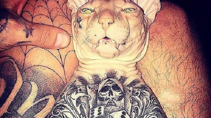 «Он дома-то мерзнет, а сейчас холода»: под Екатеринбургом пропал татуированный лысый кот