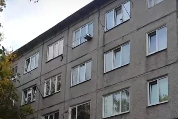 Белка на стене пятиэтажки в Академгородке