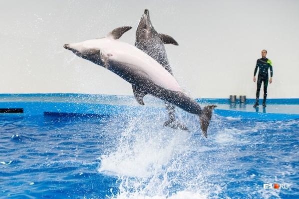 На этой неделе можно будет посмотреть на невероятное шоу дельфинов или просто погулять по океанариуму