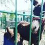 «Просто царапина»: челябинка запросила с санатория полмиллиона из-за укусившего её дочь осла
